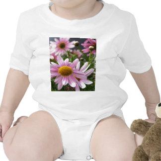 Argyranthemum frutescens Marguerite Daisies T Shirt
