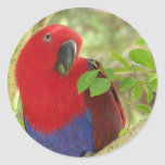 Aria Grand Eclectus Parrot Round Stickers