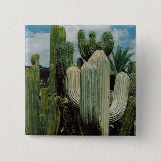 Arizona Cactus 15 Cm Square Badge