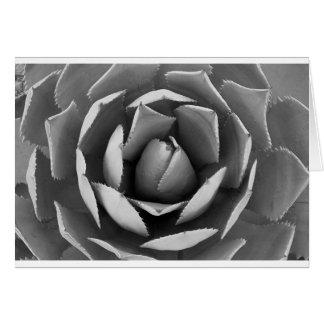 Arizona cactus card