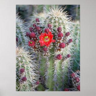 Arizona cactus posters