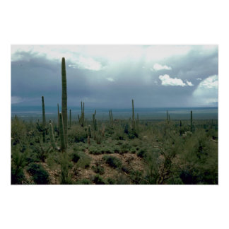 Arizona Desert and Cactuses Poster