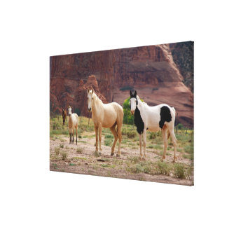 Arizona, Navajo Indian Reservation, Chinle, Stretched Canvas Prints