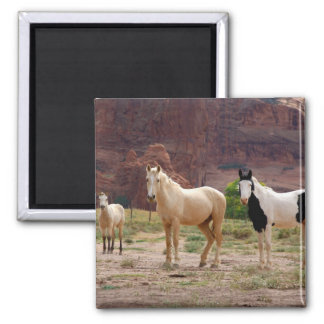 Arizona, Navajo Indian Reservation, Chinle, Square Magnet