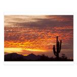 Arizona November Sunrise With Saguaro Post Cards