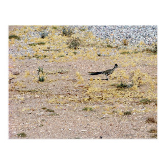 Arizona Roadrunner Postcard