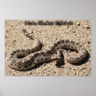 Arizona Sidewinder Rattlesnake Poster