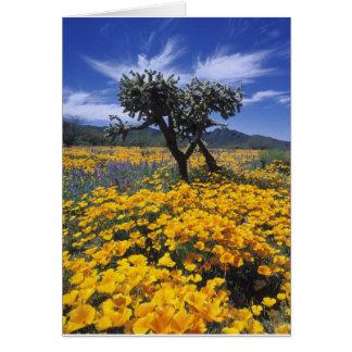Arizona Springtime Card
