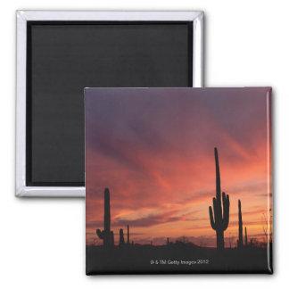 Arizona sunset over saguaro cacti square magnet