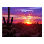 arizona sunset post cards