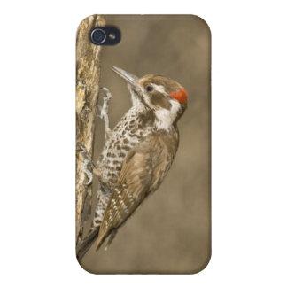 Arizona Woodpecker, Dendrocopos arizonae, South iPhone 4 Cases