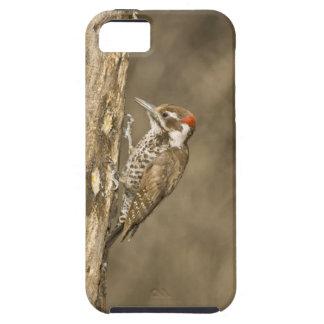 Arizona Woodpecker, Dendrocopos arizonae, South iPhone 5 Cases