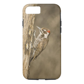 Arizona Woodpecker, Dendrocopos arizonae, South iPhone 8/7 Case