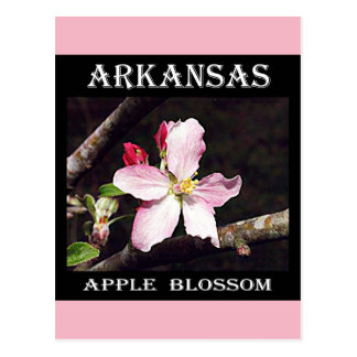 Arkansas Apple Blossom Postcard