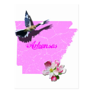 Arkansas Mockingbird & Apple Blossom Postcard