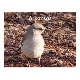 Arkansas Mockingbird Postcard