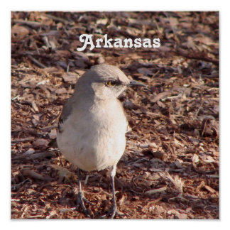 Arkansas Mockingbird Poster
