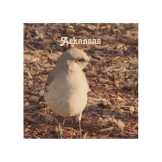 Arkansas Mockingbird Wood Print