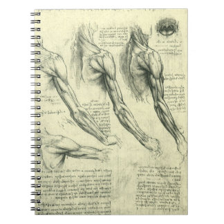 Arm and Shoulder Anatomy by Leonardo da Vinci Notebooks
