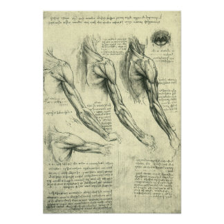 Arm and Shoulder Anatomy by Leonardo da Vinci Poster