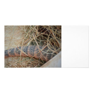armadillo tail in hay animal image picture card