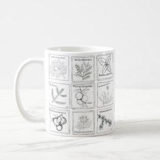 Aromatherapy Plant Sketch Mug