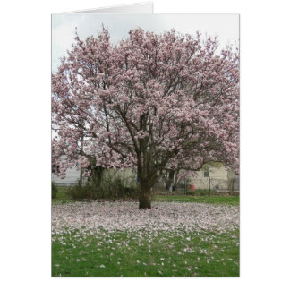 Arrival of Spring, Magnolia Tulip Tree Card