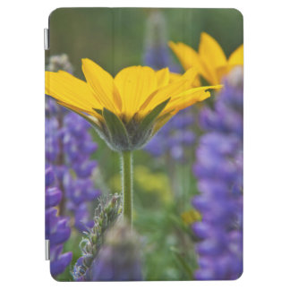 Arrowleaf Balsam Root and Lupine in Spring Bloom iPad Air Cover