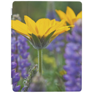 Arrowleaf Balsam Root and Lupine in Spring Bloom iPad Cover