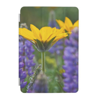 Arrowleaf Balsam Root and Lupine in Spring Bloom iPad Mini Cover