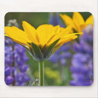 Arrowleaf Balsam Root and Lupine in Spring Bloom Mouse Mat