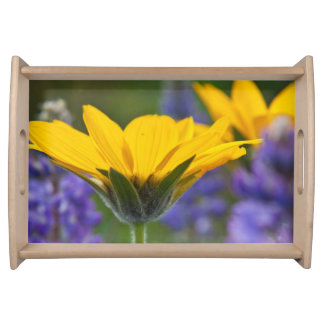 Arrowleaf Balsam Root and Lupine in Spring Bloom Serving Tray