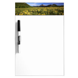 Arrowleaf balsomroot covers the praire with dry erase board