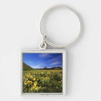 Arrowleaf balsomroot covers the praire with key ring