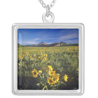 Arrowleaf balsomroot wildflowers in Waterton 2 Silver Plated Necklace
