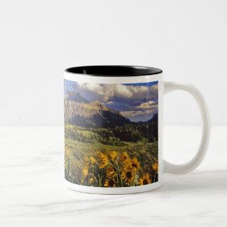 Arrowleaf balsomroot wildflowers in Waterton Two-Tone Coffee Mug