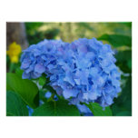 Art Print Gifts Blue Hydrangea Floral Garden