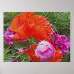Art Print: Poppies, Peonies, Orange and Pink Poster