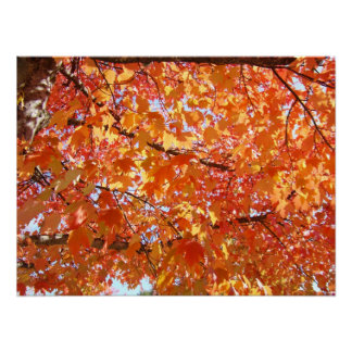 Art Prints Nature Glowing Autumn Leaves Tree Print