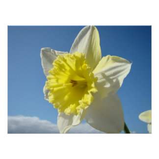 ART PRINTS Yellow Daffodil Flowers Canvas Artwork