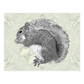 Art Squirrel Postcard