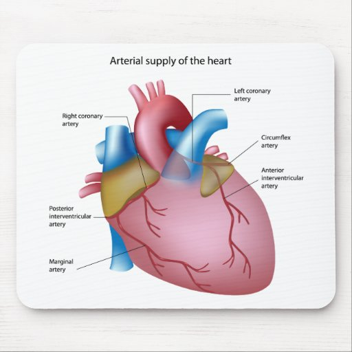 Arterial Supply Of The Heart Mousepad Zazzle