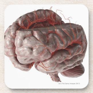 Arteries of the Brain 3 Beverage Coasters