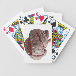 Arteries of the Brain 3 Bicycle Playing Cards