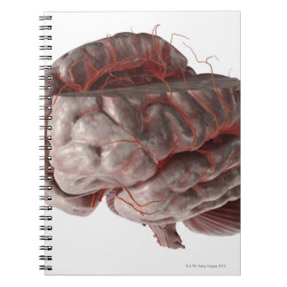 Arteries of the Brain 3 Notebook