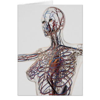 Arteries, Veins, And Lymphatic System 1 Card