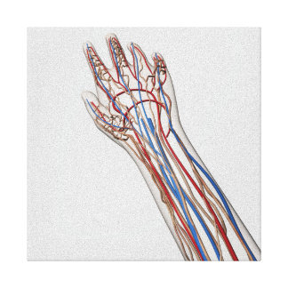 Arteries, Veins, And Lymphatic System 3 Canvas Print