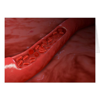 Artery Cross Section With Red Blood Cell Flow Card