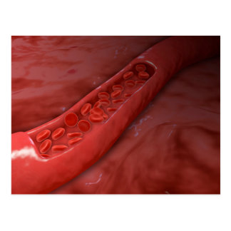 Artery Cross Section With Red Blood Cell Flow Postcard