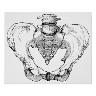 Articulated Pelvis Poster